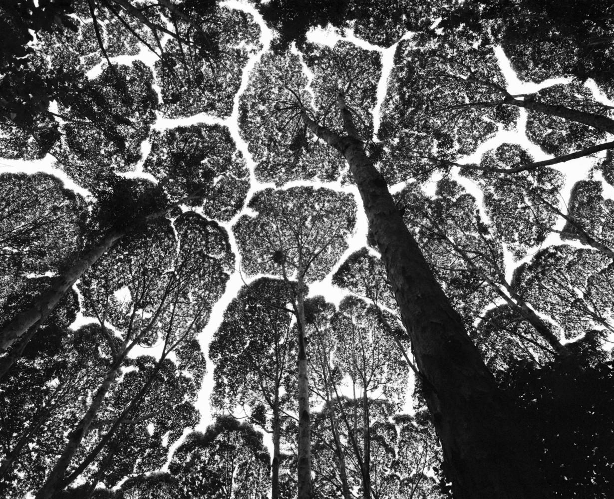 Trees of Life • Magnum Photos