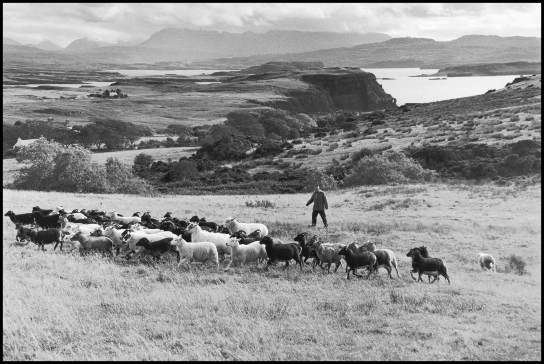 Elliott Erwitt's Scotland • Elliott Erwitt